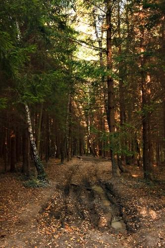 La Maladière : Sur un sentier dans les bois dans lesquels le soleil commence à pénétrer