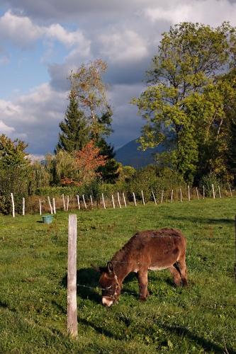 La Maladière : Un petit âne paissant tranquillement dans son enclos