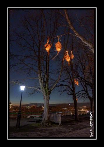 Des nids étranges ont envahi les arbres à la Treille (Genève)