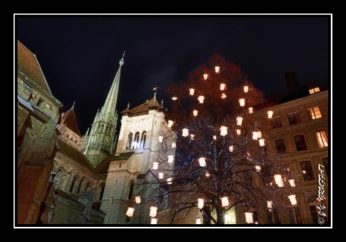 Arbre en lumière et la cathédrale Saint-Pierre
