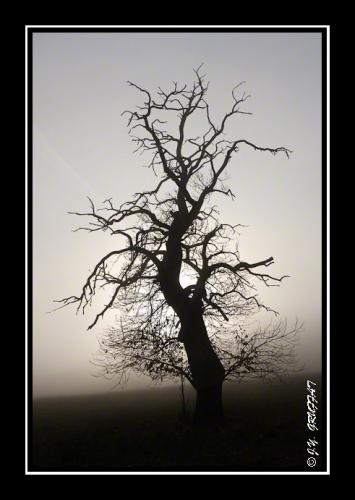 40d23082brouillard201112