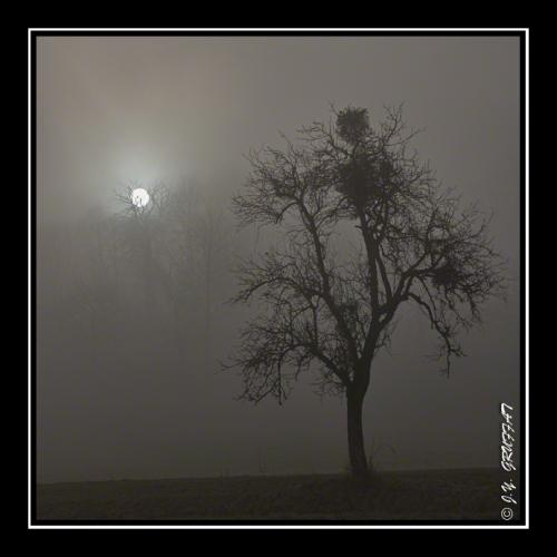 40d2306823070hbrouillard201112
