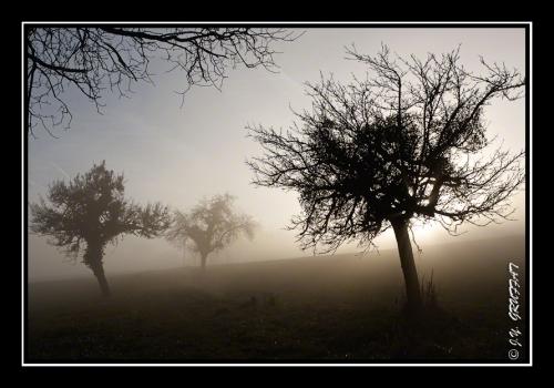 40d23089brouillard201112