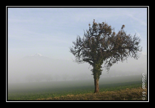 40d23091brouillard201112