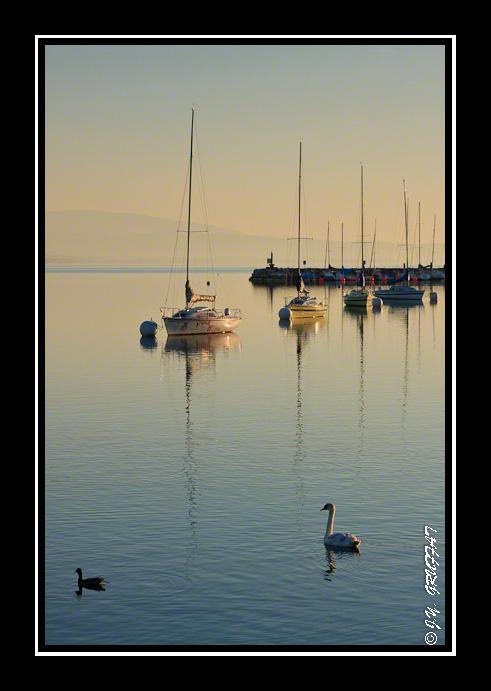 Voiliers et cygne sur les eaux calmes du lac Léman au lever du soleil