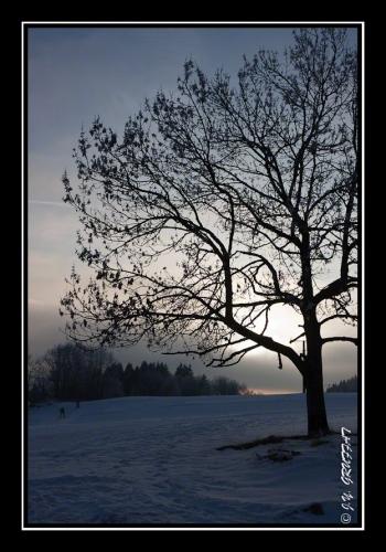 Silhouette hivernale