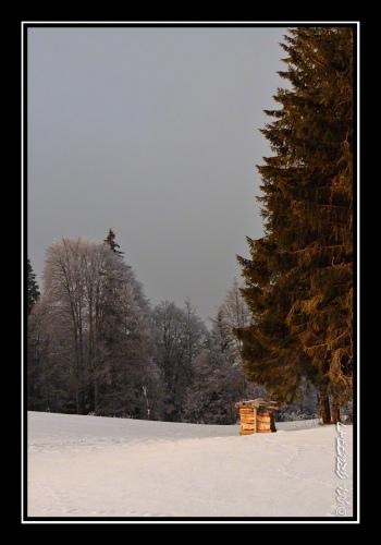 Un peu de bois pour l'hiver ?