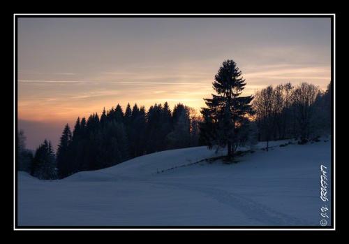 Lumière flamboyante d'un coucher de soleil derrière les sapins