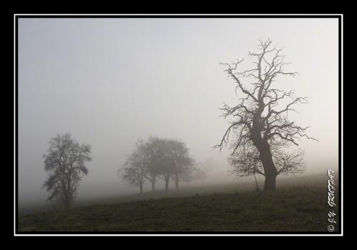 40d23081brouillard201112