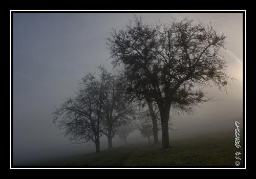 40d2308423086hbrouillard201112
